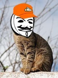 Dale_The_Cat.jpg