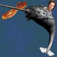 Narwhal-kevin-bacon