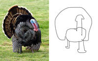 draw-turkey-with-your-eyes-closed.jpg