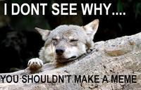 Ignorant to Adversity wolf