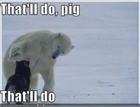 that'll do pig that'll do