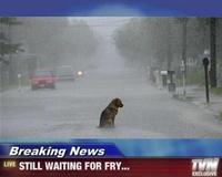 Fry's Dog