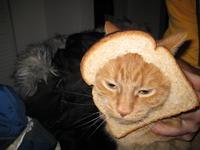 Cat Breading