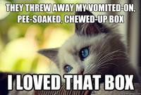 First World Problems Cat