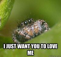 Misunderstood Spider