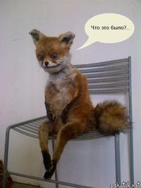 Stoned Fox (Упоротая лиса)