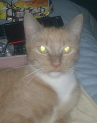 Light Globe Cat