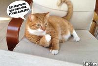 Mylo the Cat