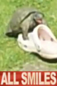 Tortoise Sex Face