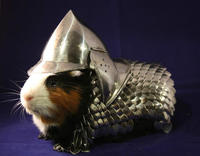 Guinea Pig Armor Charity Auction