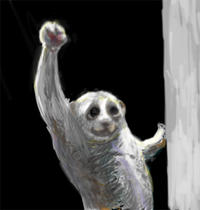 Slow Loris' Victory Pose with UC