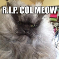 Colonel Meow Meme
