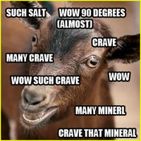 I Crave That Mineral