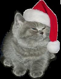 Little Grey Cat