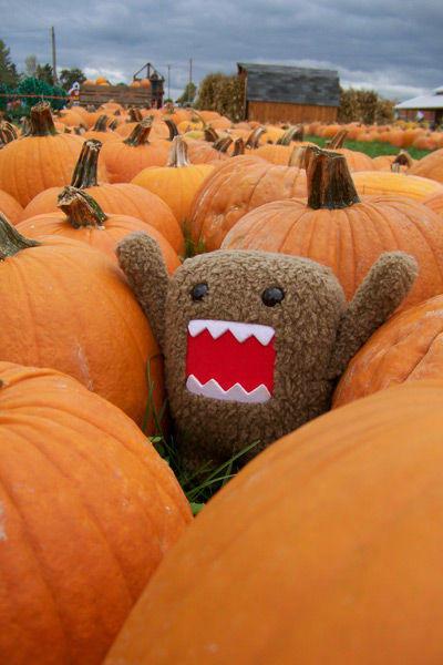 domoPumpkin.jpg