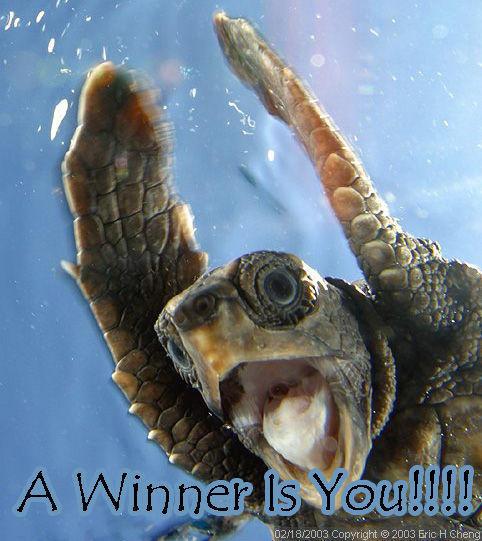 a_winner_is_you.jpg