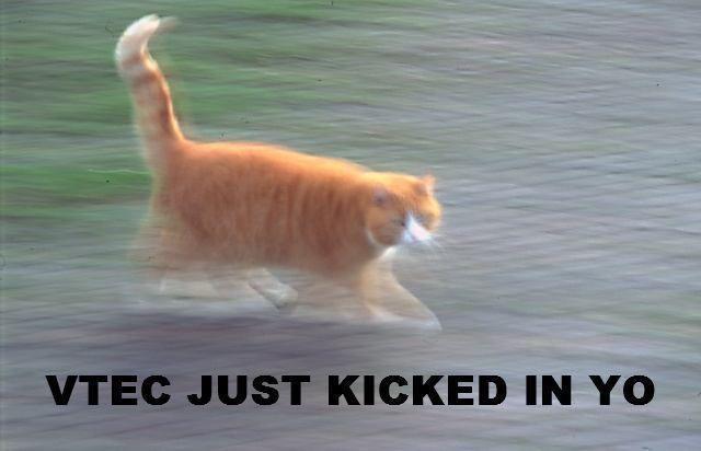 Vtec_cat.jpg