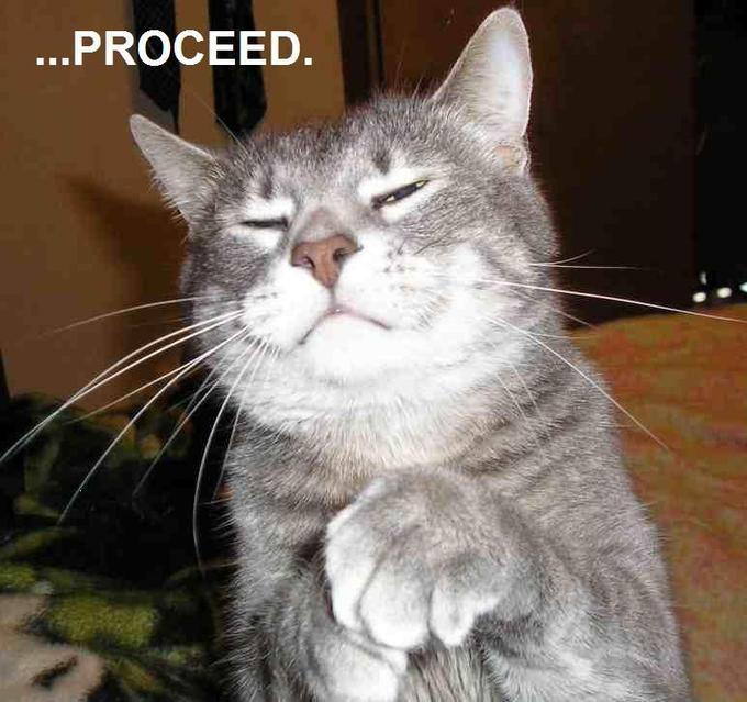 cat-proceed.jpg