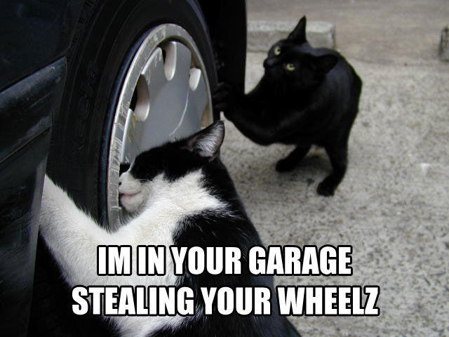 cat-stealing-wheel.jpg