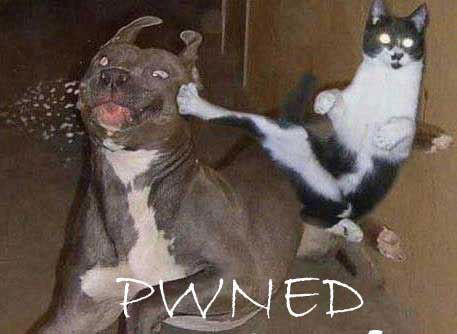 pwned-catkick.jpg
