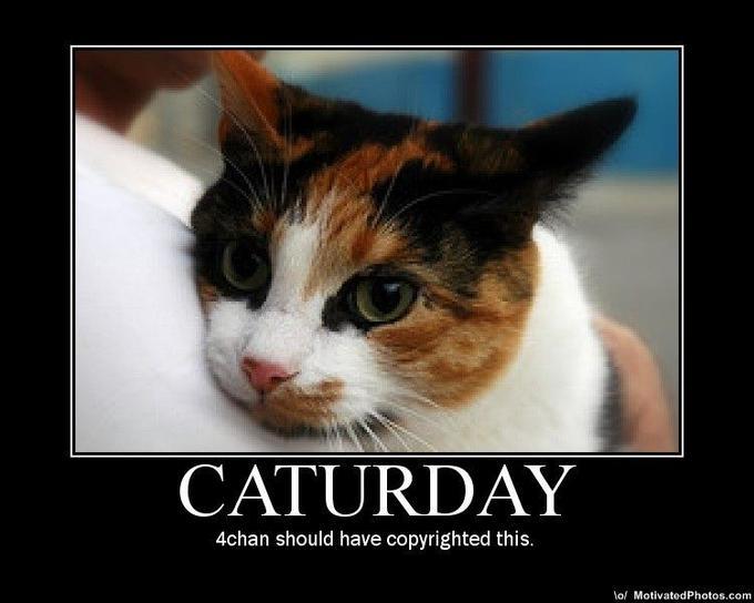 633670027035129421-caturday.jpg