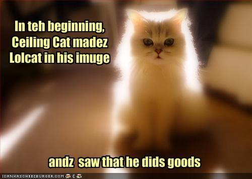 funny-pictures-the-creation-story-of-lolcats.jpg