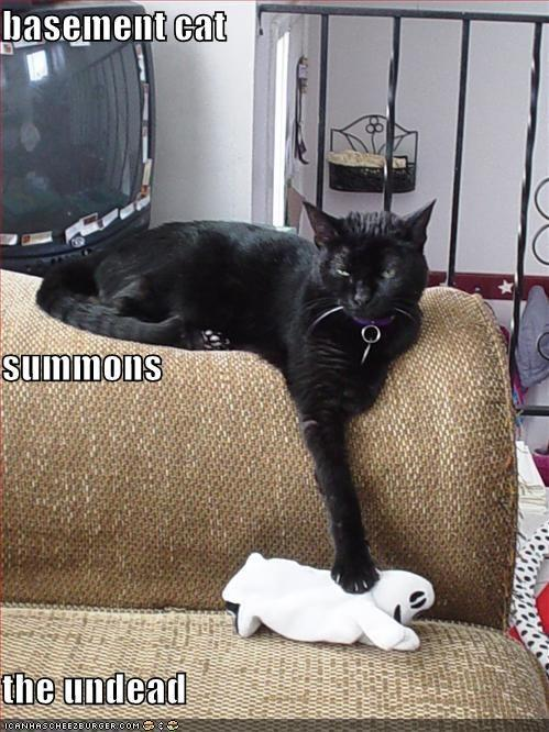 funny-pictures-basement-cat-summons-the-undead.jpg