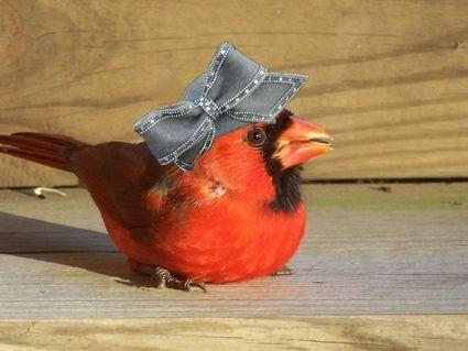 birds-do-it-bees-do-it-17801-1232798381-5.jpg