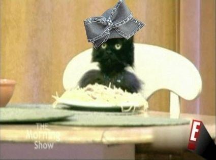 spagetti-cat-aretha-19102-1232724371-0.jpg