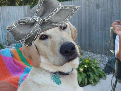 pluto-the-wonder-dog-18733-1232659891-10.jpg