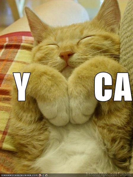 funny-pictures-ymca-cat.jpg