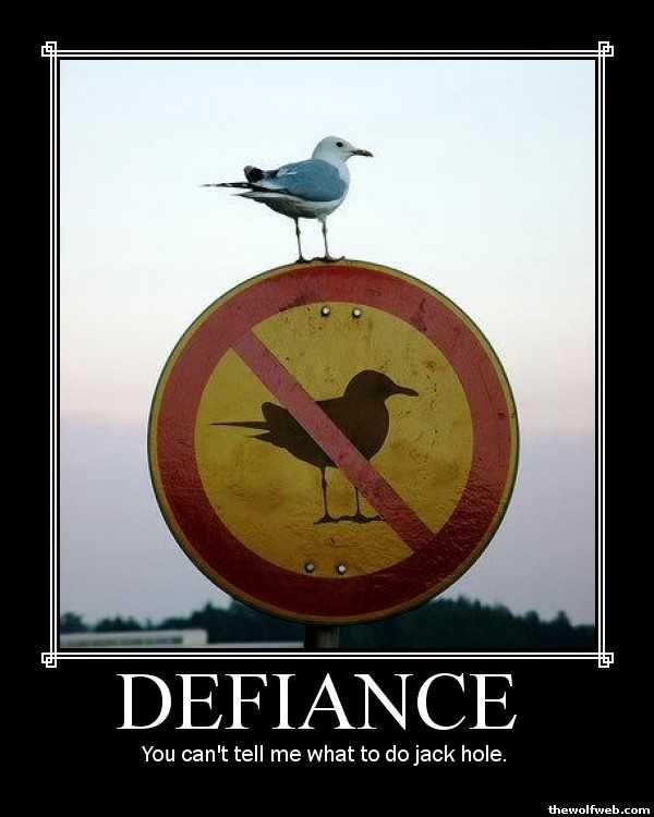 defiance.jpeg