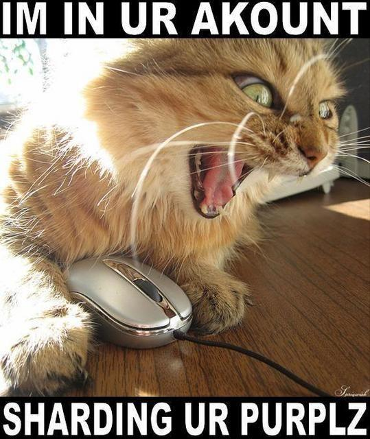 seehere.blogspot.com_20cats_20_43_.jpg