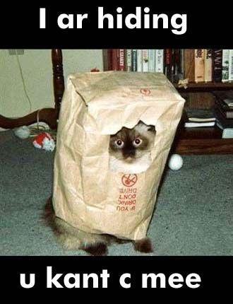 seehere.blogspot.com_20cats_20_46_.jpg