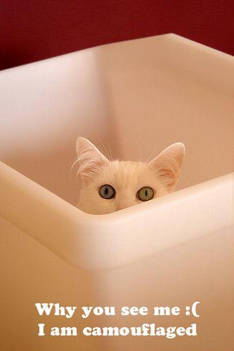 seehere.blogspot.com_20cats_20_8_.jpg