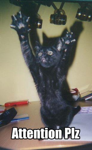 seehere.blogspot.com_20cats_20_9_.jpg