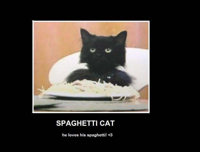 spaghetti_cat_by_emoXpandaXbear.jpg
