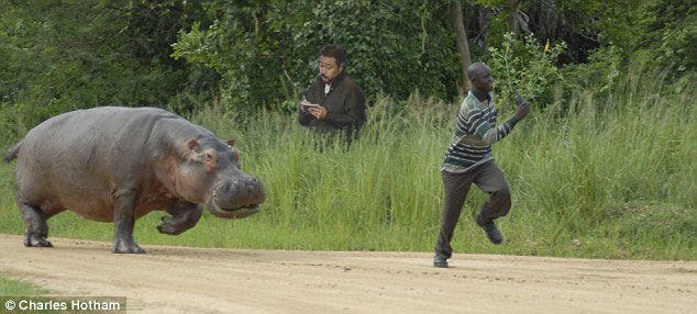 translator_vs_hippo_vs_runner.jpg