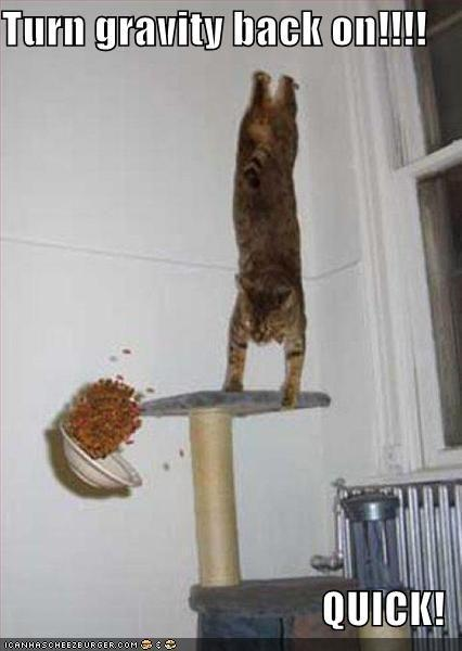 funny-pictures-gravity-cat.jpg