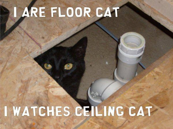 FLOOR_CAT_by_theMarioBrother.jpg
