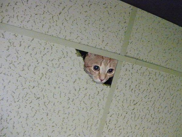 CEILING_CAT_by_Madd_Mikk.jpg