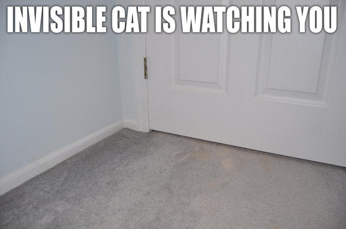 Lolcat__INVISIBLE_CAT_by_Mjag.jpg
