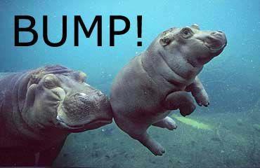 hippo_bump.jpg