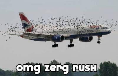zerg_rush.jpg