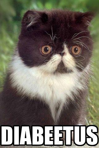 diabeetus_cat.jpg