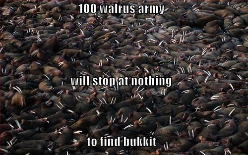 104-walrus-army.jpg