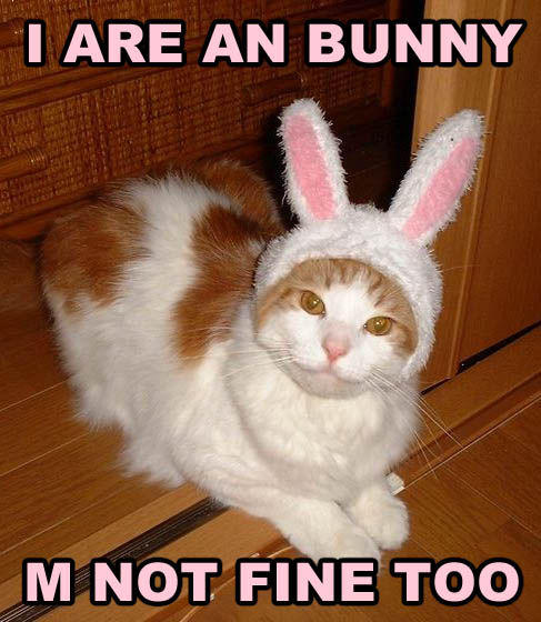 Bunny_fine_too.jpeg