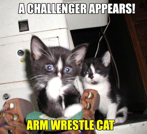 Arm_Wrestling_Cat.jpg