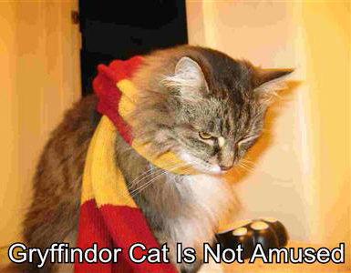 gryffindor-cat-is-not-amused.jpg