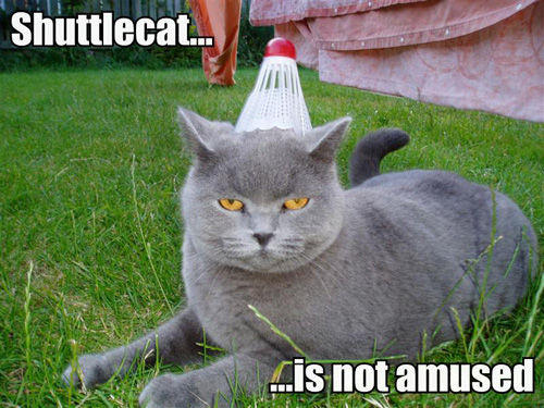shuttlecat-is-not-amused-771503.jpg